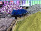 Especias en los zocos de Marrakech