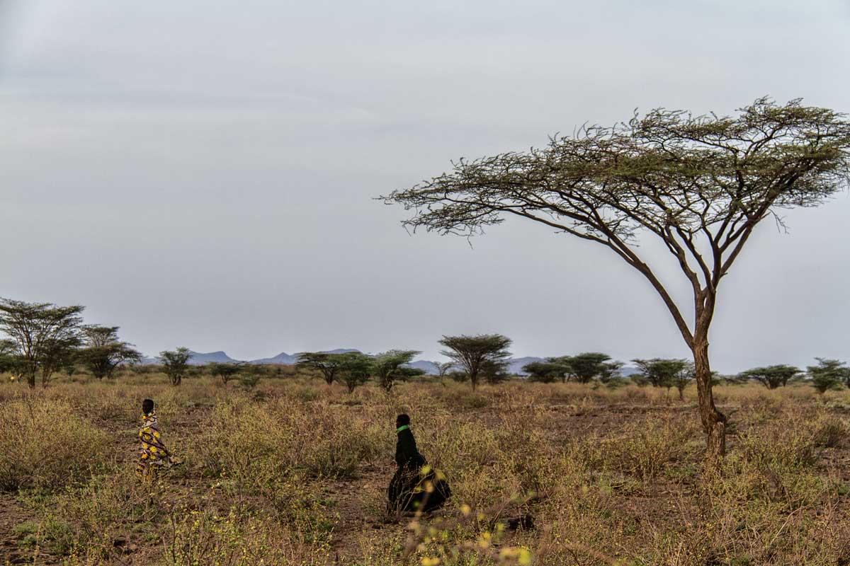 En la savanna Turkana