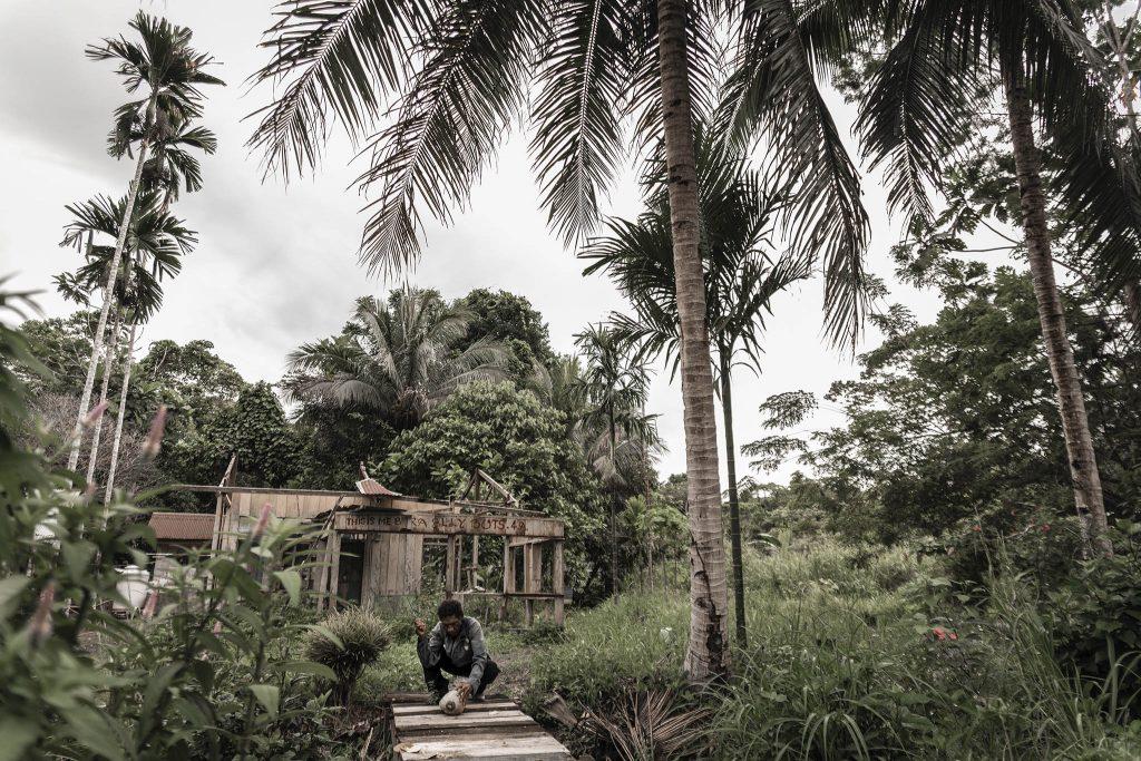Cocos para beber en Papua