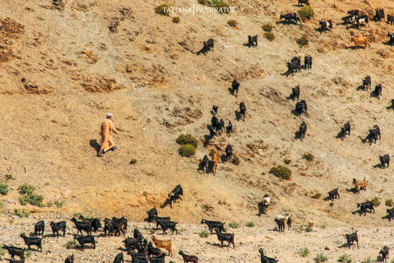 Alto Atlas pastor y cabras